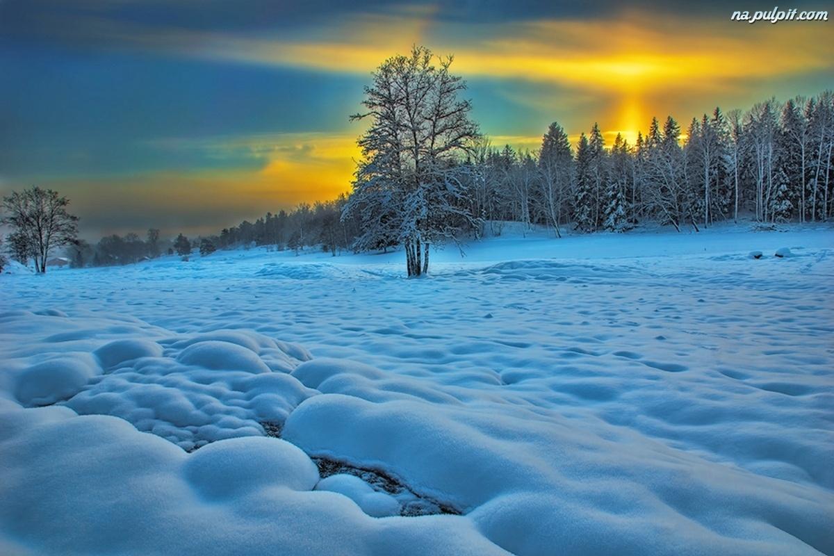 Zima Las Zach Nieg Pulpit